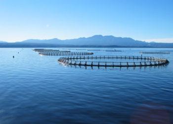 Salmon Farm Tasmania